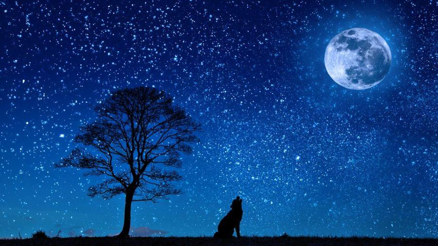 10 Strange Facts about Dreams