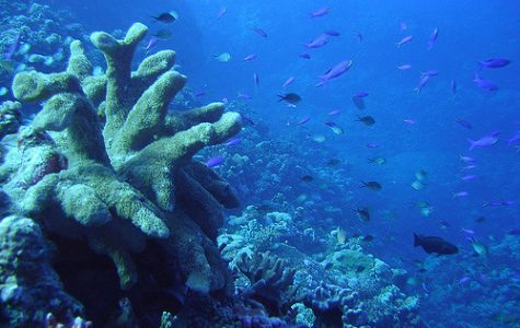 Great Barrier Reef is Damaged Again by Coral Bleaching