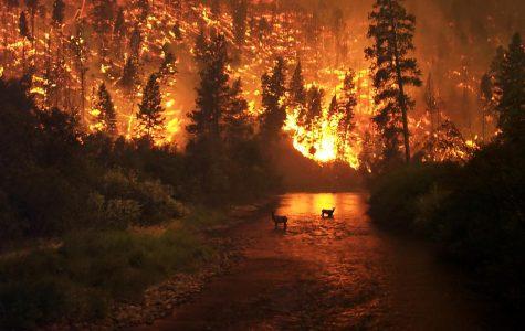 Napa Valley Fire