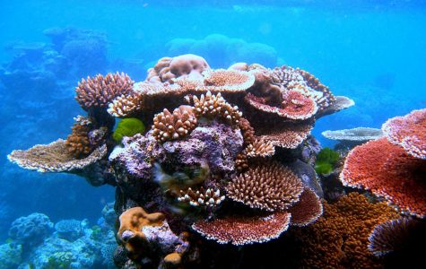 Great Barrier Reef Saved?