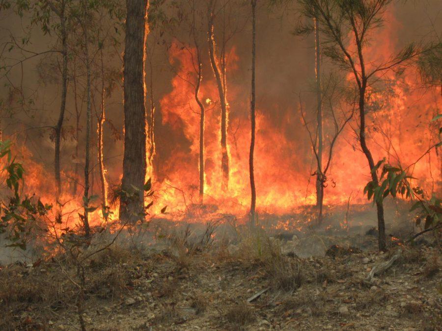 Australian+Bush+Fires